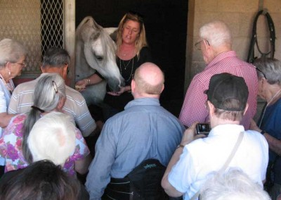 Kelly Pina, manager of Kellogg Arabian Horse Center, Cal Poly Pomona, introduces an Arabian to our members